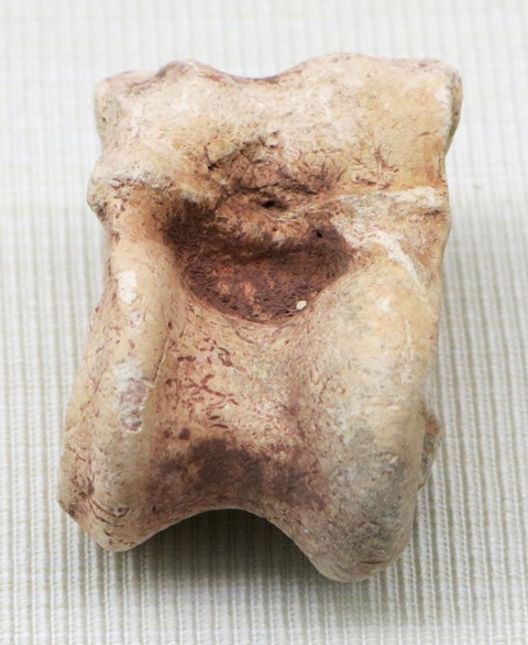 Fig. 32. Sheep or deer astragalus, Kharub, Chamdo. Middle or Late Phase (5300–4000 BP). Tibet Museum collection.
