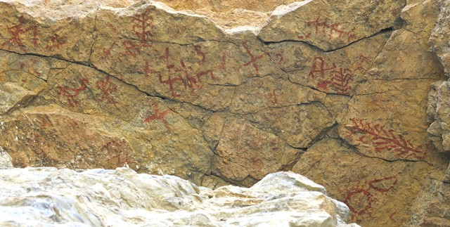 Fig. 81. A view the rock ceiling on which fig. 78 is situated. There are a number of swastikas and trees among these pictographs as well as the bird and anthropomorph of fig. 21. Protohistoric or Early Historic period.