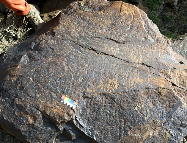 Fig. 13.5. Anthropomorphic and zoomorphic rock art of various phases. To the right of the color calibration scale is an emblematic anthropomorph. Due to heavy erosion and the mingling of figures, few petroglyphs are readily identifiable on this boulder.