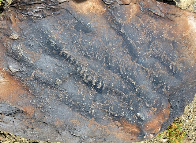 Fig. 13.6. A number of wild caprids arrayed diagonally across a boulder. Note the spiral on the upper right side of the rock. Protohistoric period.