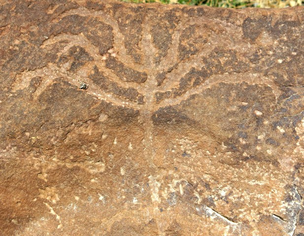 Fig. 14.66. A tree-like subject with seven branches some of which are forked (23 cm wide). Protohistoric period.